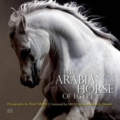 The Arabian Horse of Egypt By. Cynthia Culbertson